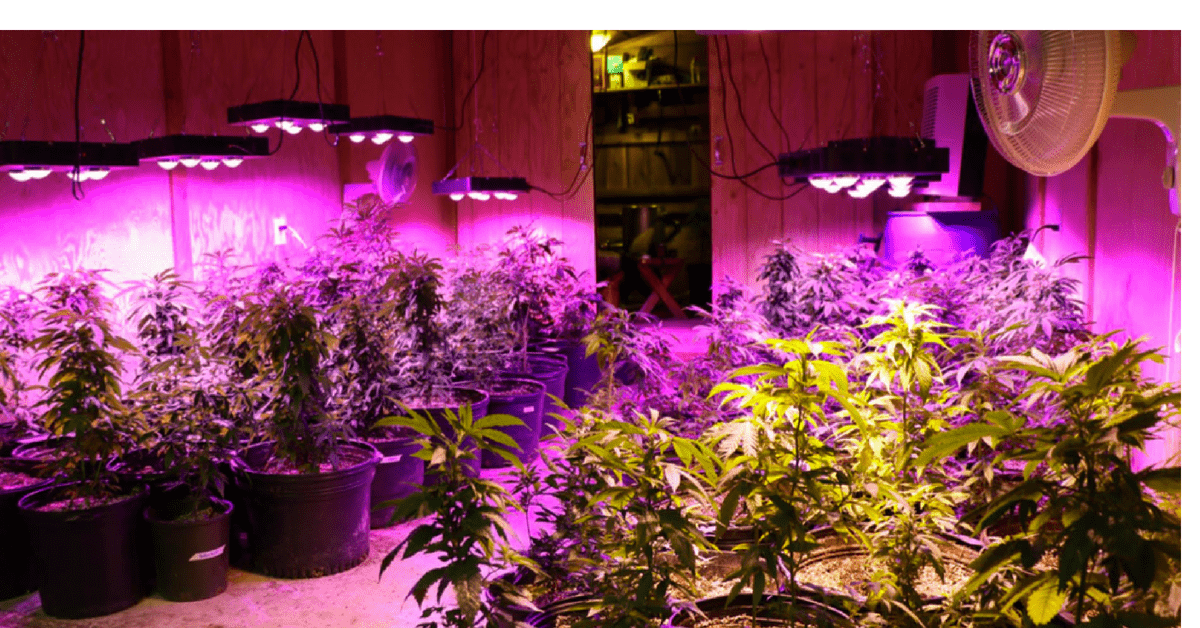 The 6 Best LED Grow Lights of 2018