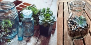 succulent jar bottle plants