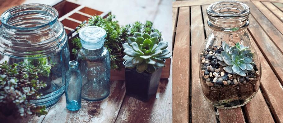 succulent jar bottle plants