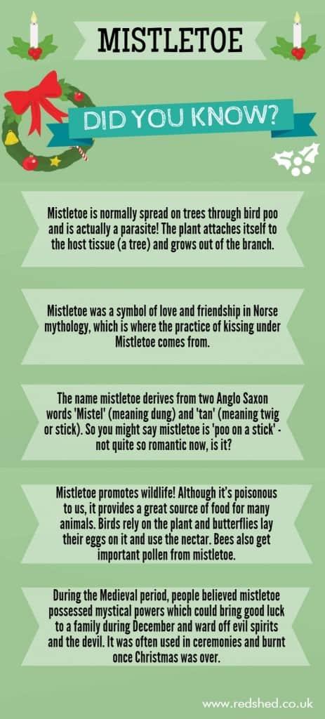 Mistletoe infographic