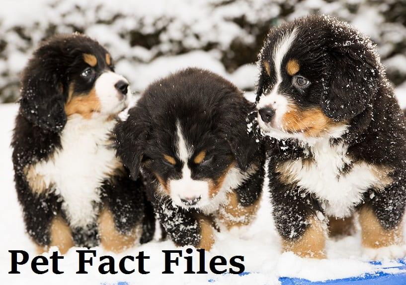 pet fact files