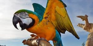 caring for a parrot