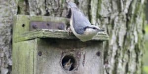 make a bird nesting box