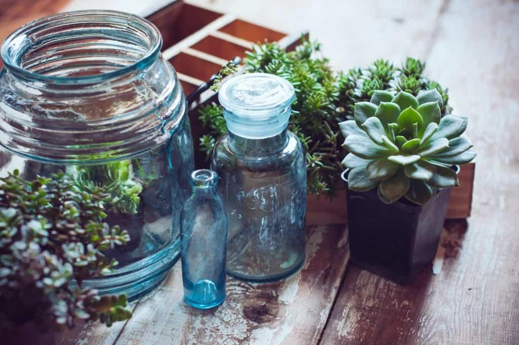 succulent bottles